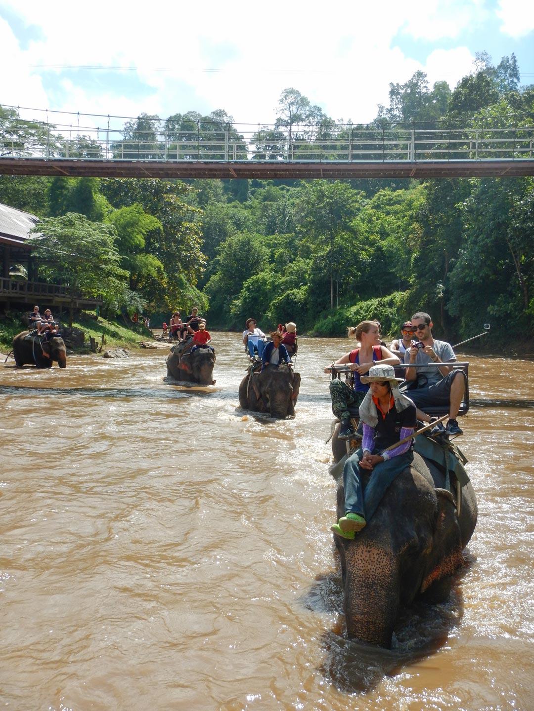 Passeggiata sugli elefanti